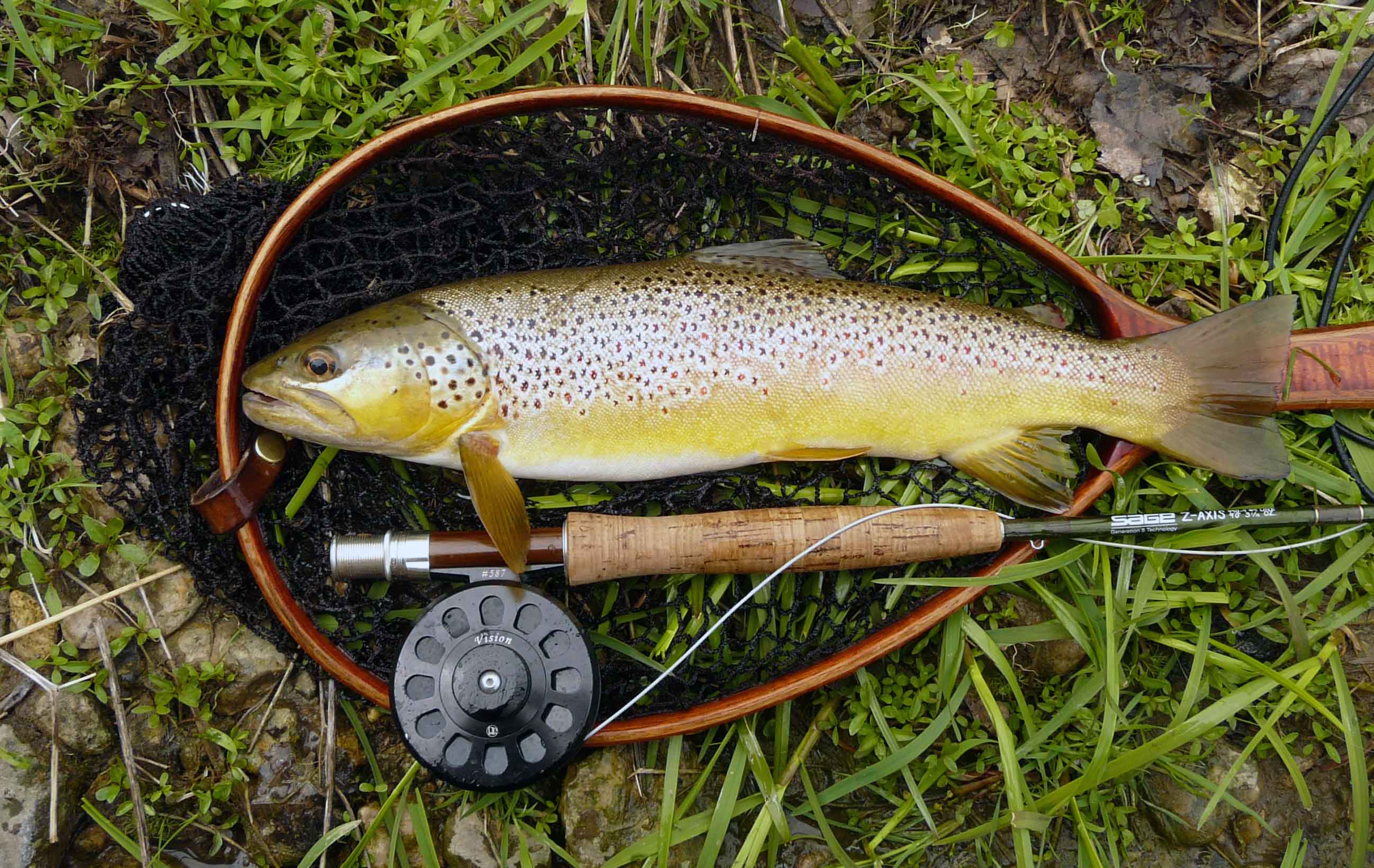 Fly fishing for brown trout fly fishing rod reel and for Brown trout fly fishing