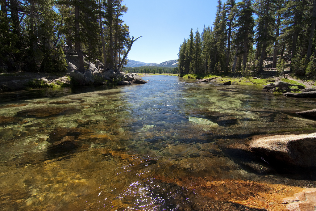 Why fly fishing is so adament on catch and release and it for Fish and stream