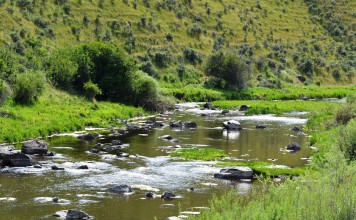 Fly-Fishing-The-Snake-River-Fly-fish-for-fun