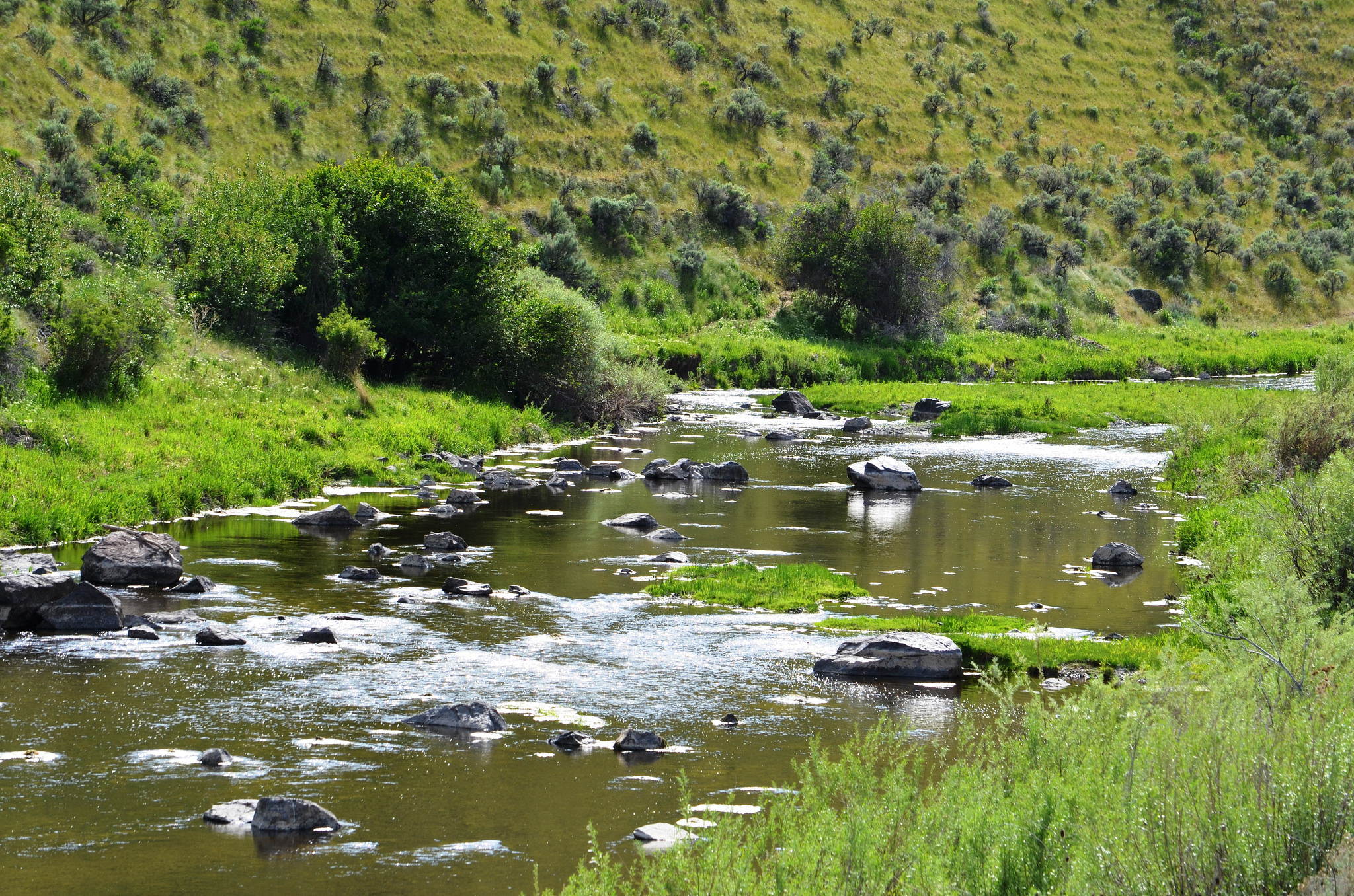 Using fly fishing to charm the snake river fly fishing for River trout fishing