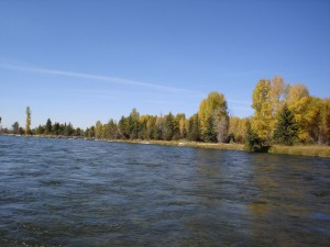 Snake River - Fly fish for fun